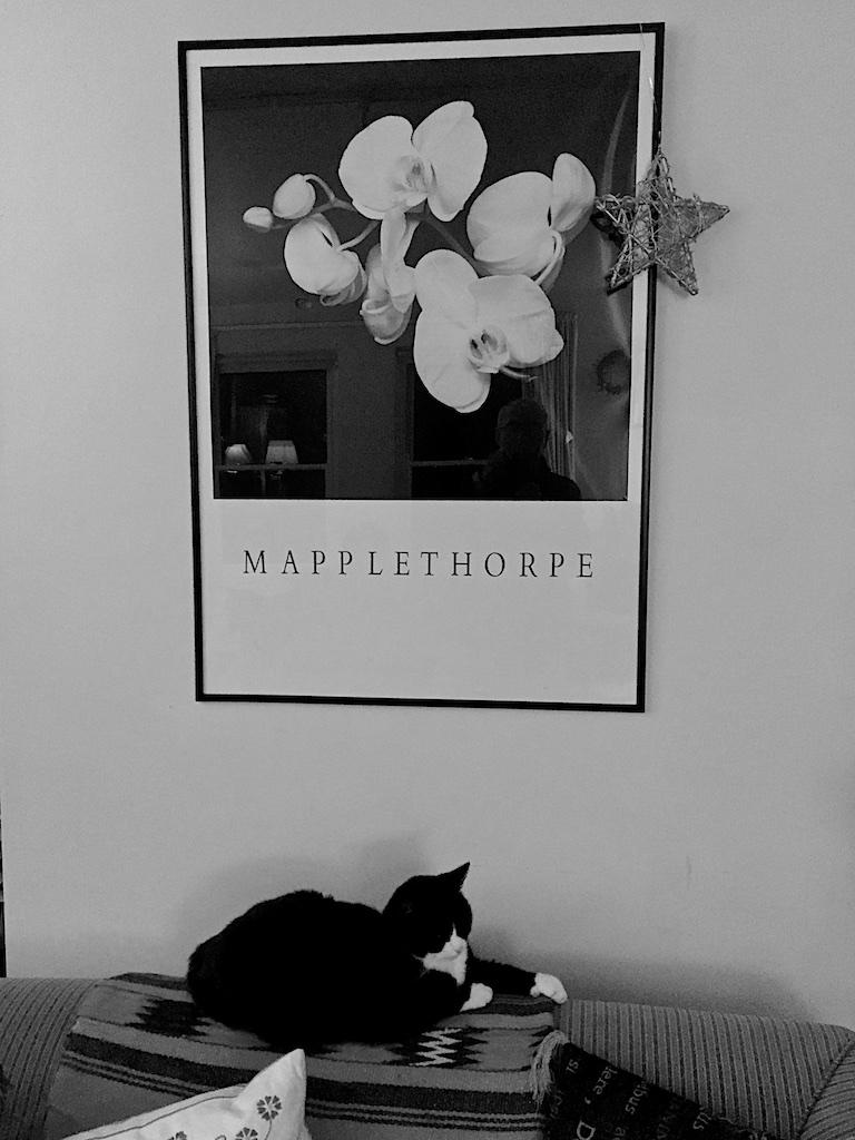 Cat+Mapplethorpe