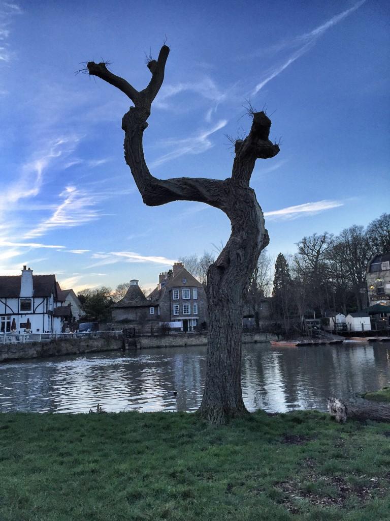 Mill_Pond_tree_edited